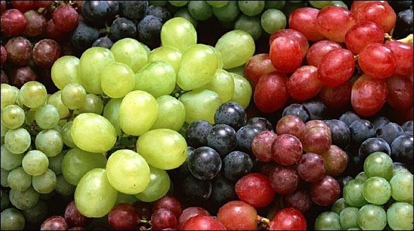 grapes-cultivation02