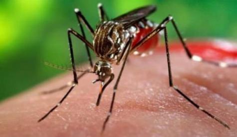 خیبرپختونخوا، مزید 410افراد ڈینگی وائرس کا شکار ہوگئے