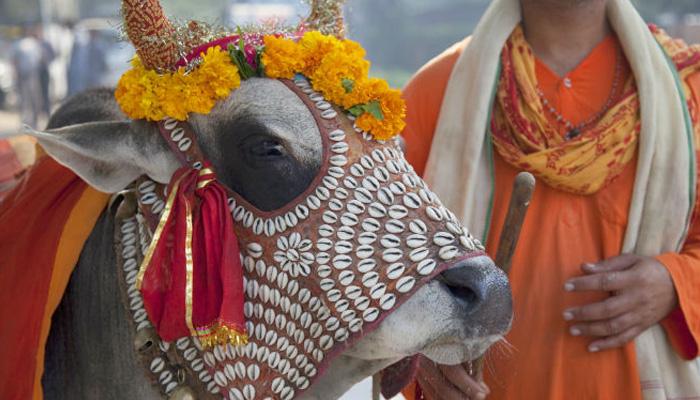 بھارت میں بی جے پی کا گائے کی گوشت پر پابندی سے انکار