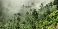 مری کے جنگلات کو ایک اور خطرہ