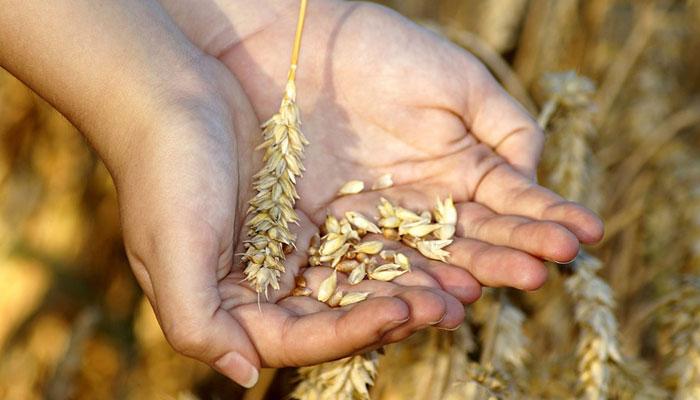 عالمی سطح پر خوراک کی قلت اور غذائیت کی کمی میں مسلسل اضافہ، اقوام متحدہ