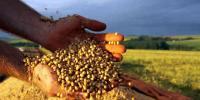 برازیل کی سویا کی ملکی پیداوارکا 80 فیصد چین کو برآمد
