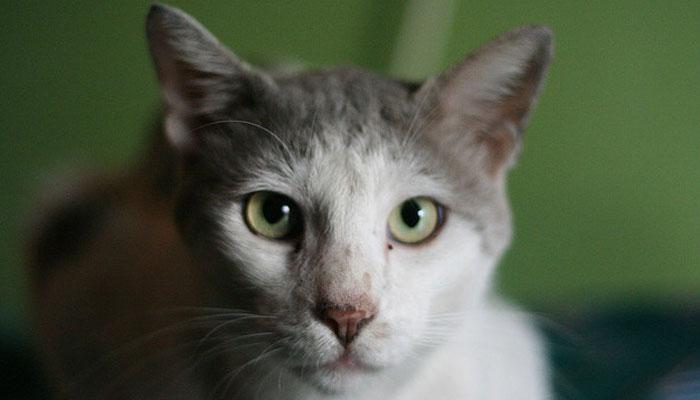 ملائیشیا،بلی کو مارنے والے شخص کو 2 سال قید