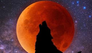Bloody Moon Eclipse Wolf