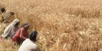 قومی زرعی ایمرجنسی پروگرام، آئندہ 5سال میں 290ارب روپے کے 13منصوبے