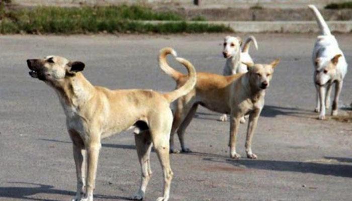 سندھ اسمبلی، آوارہ کتوں کو چین اور فلپائن ایکسپورٹ کرنے کی تجویز