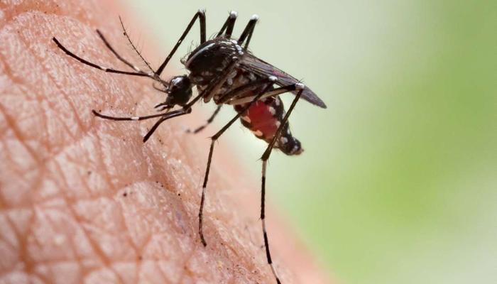 2050تک ملیریا کا خاتمہ کیا جاسکتا ہے، تحقیقی رپورٹ