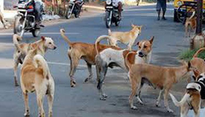 ٹنڈوآدم سگ گزیدگی سے 7مرد و خواتین زخمی