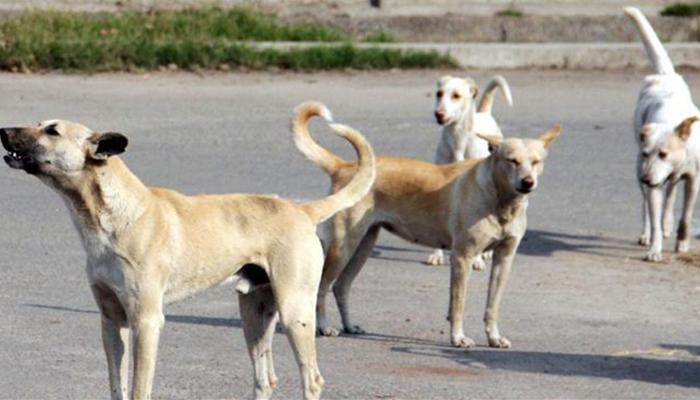 جیکب آباد میں کتے کے کاٹنے کا لرزہ خیز واقعہ