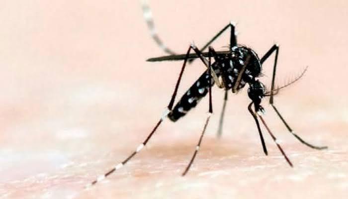 شہر میں ایک روز میں 44 افراد ڈینگی وائرس سے متاثر