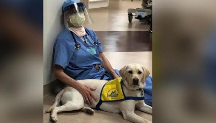 برطانیہ کا کوروناوائرس کی تشخیص کیلئے کتوں کو تربیت دینے کا فیصلہ