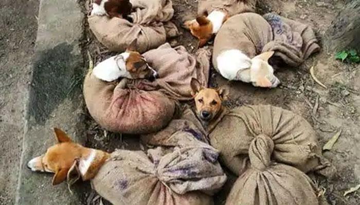 بھارتی ریاست ناگالینڈ نے کتے کے گوشت کے کاروبار پر پابندی عائد کر دی