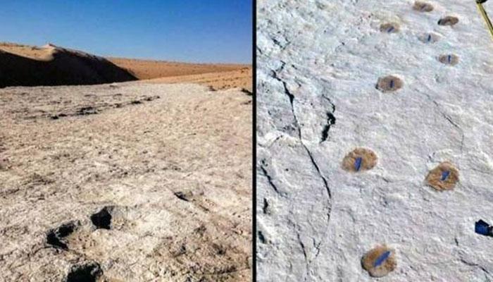 سعودی عرب، انسانوں اورجانوروں کے1 لاکھ 20 ہزار سال قدیم آثار دریافت