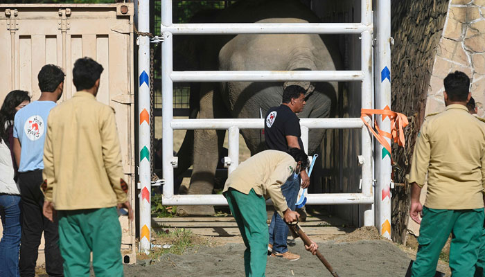 بھارت کی رکاوٹ، کاون ہاتھی کمبوڈیا روانہ نہ ہوسکا