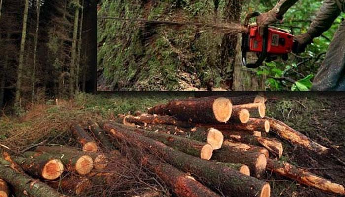 انسانوں نے دنیا کے پرانے استوائی جنگلات کا دو تہائی حصہ تباہ کر دیا ماحولیات کیلئے صورتحال خطرناک