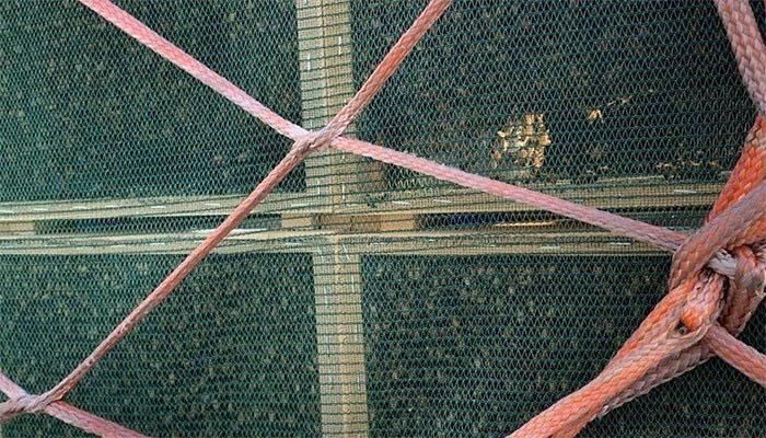 چائنا ایئر لائن کی پرواز پر شہد کی ہزاروں مکھیوں کا خصوصی سفر