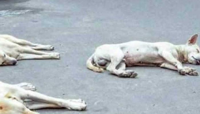 سندھ میں کتا مار مہم کے نام پر کروڑوں روپے خرچ، تحقیقات شروع