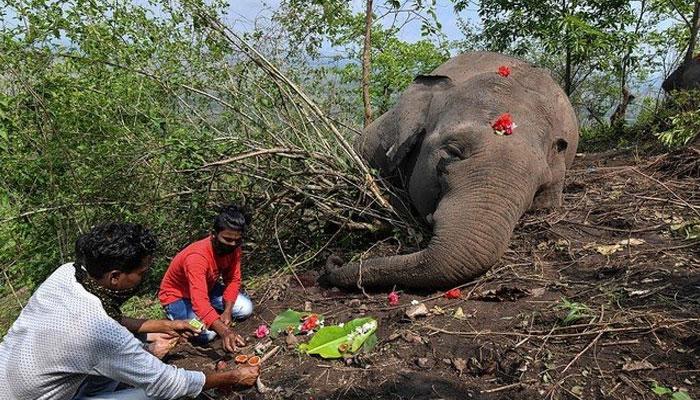 بھارت میں'آسمانی بجلی' گرنے سے 18 ہاتھی ہلاک