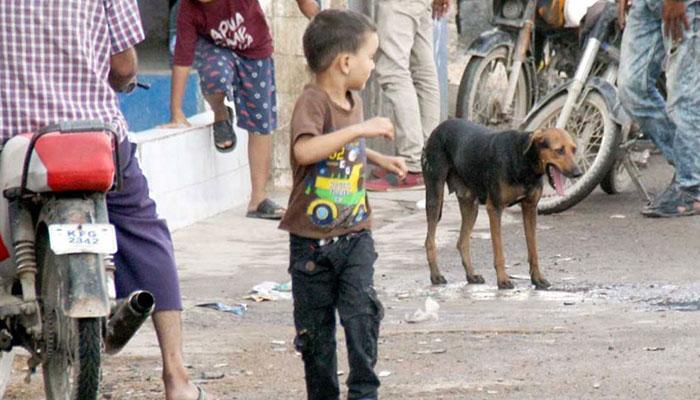 2020،کتوں کے کاٹنے کے سب سے زیادہ سندھ میں 2 لاکھ واقعات