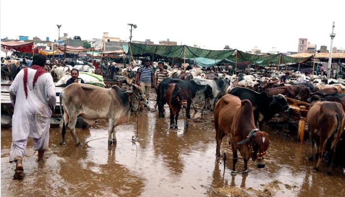 مویشی منڈی میں بارش سے تباہی، فوج نے انتظامات سنبھال لئے