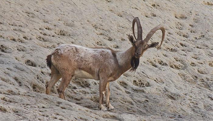 سندھ میں غیرقانونی شکار کی وجہ سے حیاتیاتی تنوع خطرے سے دوچار