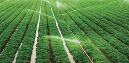 زراعت میں پانی کا ضیاع اور جدید نظام آبپاشی