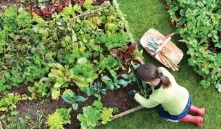 گھر میں سبزیاں اُگانا، مشغلہ بھی، صحت بھی