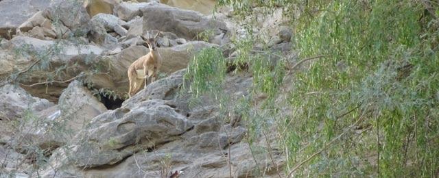 دشت و دریا: قدرت کی رنگینیوں سے مالا مال '' ہنگول نیشنل پارک''