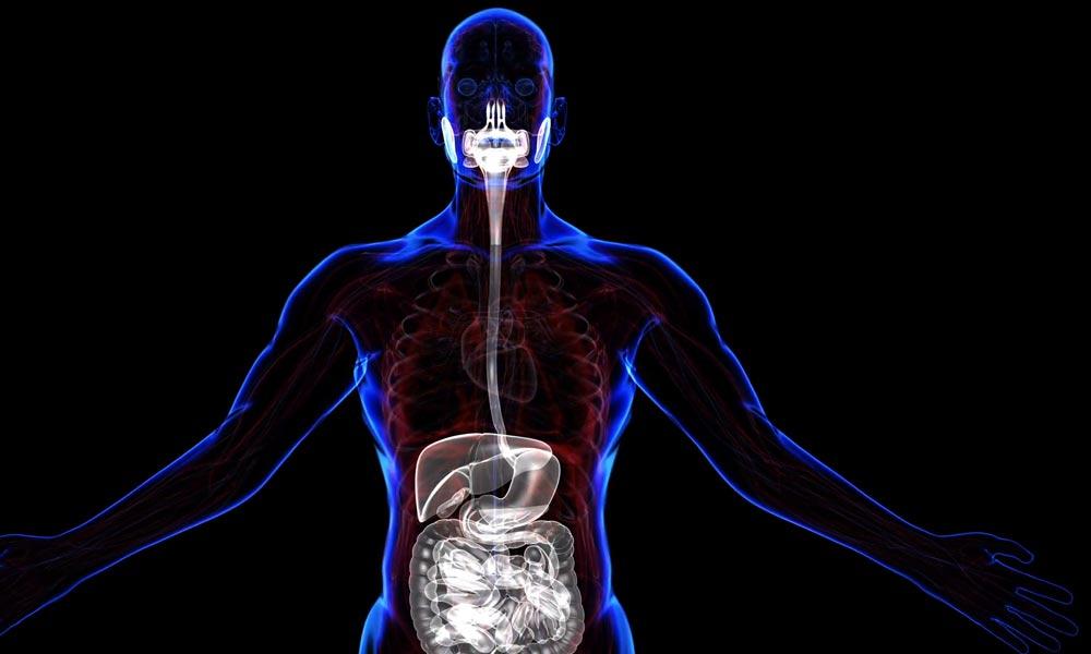صحت مند زندگی کا راستہ بہتر نظام ہاضمہ