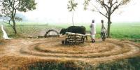 پاکستان کی دیہی زرعی معیشت