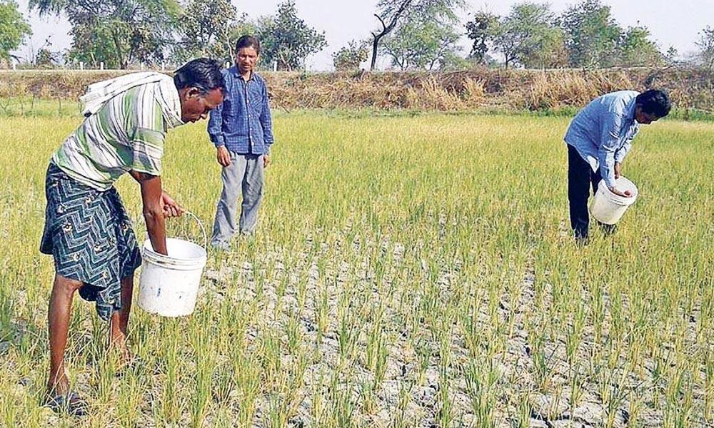 ناقص پالیسیوں کے باعث کسان اور زراعت بد حال