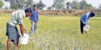 ناقص پالیسیوں کے باعث کسان اور زراعت بدحال
