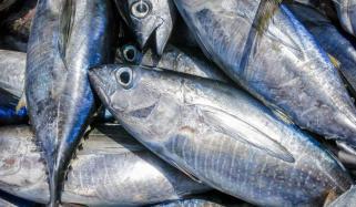 ٹونا مچھلی کھانا کیوں ضروری ہے؟