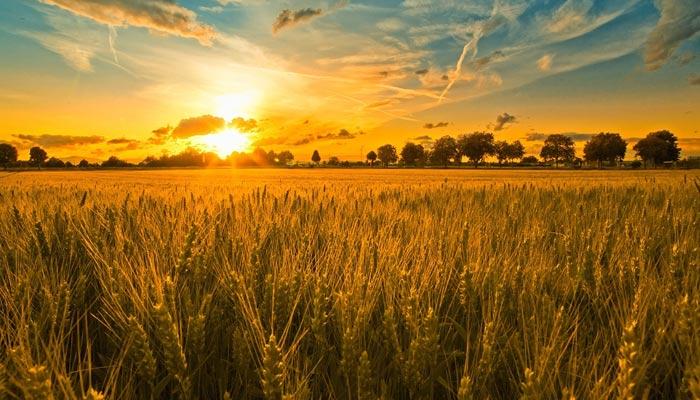 زرعی شعبے کے موحولیاتی مسائل