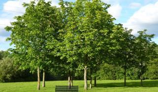 بڑھتی ہوئی حرارت کی روک تھام کیلئے درخت لگائیں