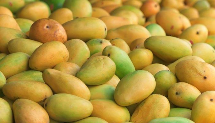 آم کے پھل کی برداشت