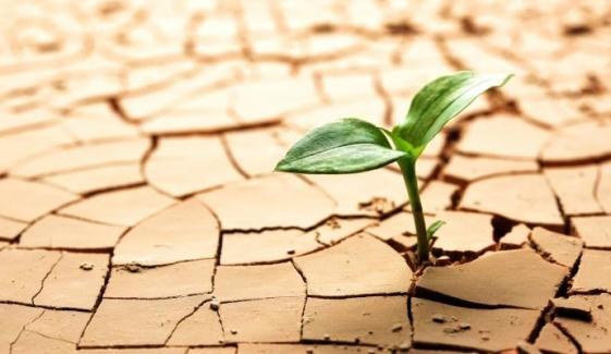 خشک سالی کے دوران زمین کی تزئین و آرائش