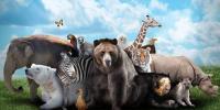 جانوروں کے حقوق