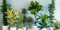 آپ کا برج کرے... گھر کے لیے بہترین پودوں کا انتخاب
