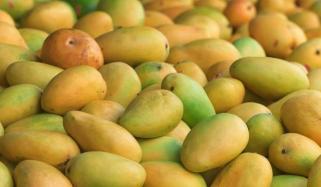 یہ آم ہے آم...!! کوئی ''عام'' پھل نہیں