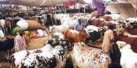 سہراب گوٹھ، کراچی کی مویشی منڈی