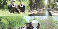 دنیا کا سب سے بڑا مصنوعی جنگل ''چھانگا مانگا''