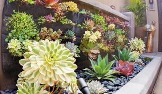 اپنے گھر کی دیواروں کو سبزہ زار سے سجائیں