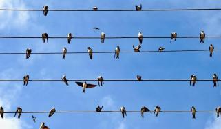 بجلی کے تاروں پربیٹھے پرندے ہلاک کیوں نہیں ہوتے؟