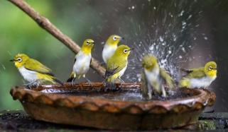 Water Grain For Birds Is Sadqah