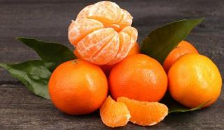 Winter Fruit Orange
