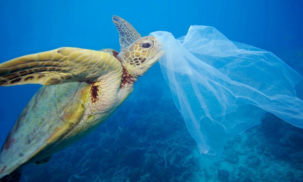 سمندر میں پلاسٹک کچھوئوں کا دشمن