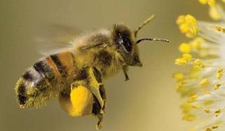 Now Honey Bee Can Also Calculate