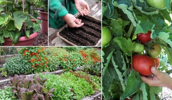 Grow Vegetables At Home