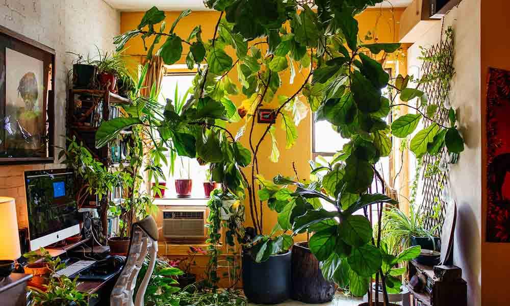 سمر رینی کے اپارٹمنٹ میں 700 پودے